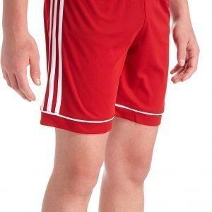 Adidas Squadra 17 Shorts Punainen